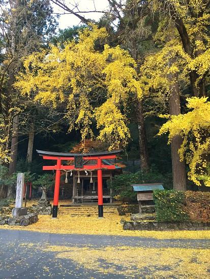 yellow shrine photo