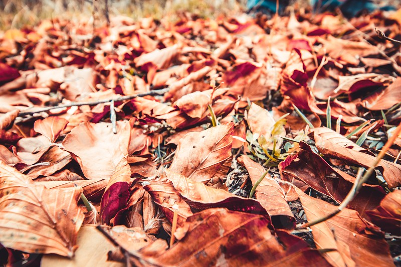 Autumn Brown Red Dry Leaves photo
