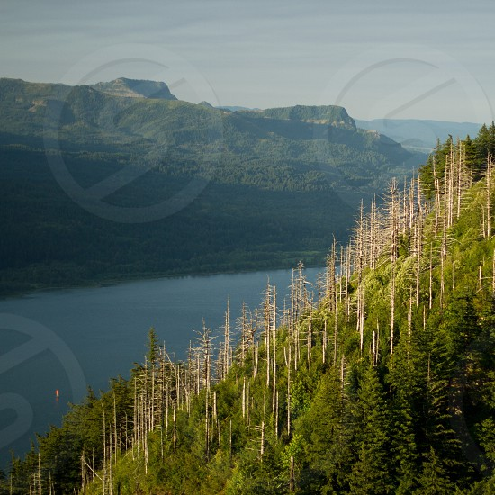 green and brown trees overlooking lake and mountains photo