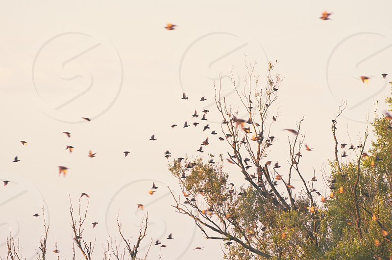 Flock of Birds Flying from the Tree photo