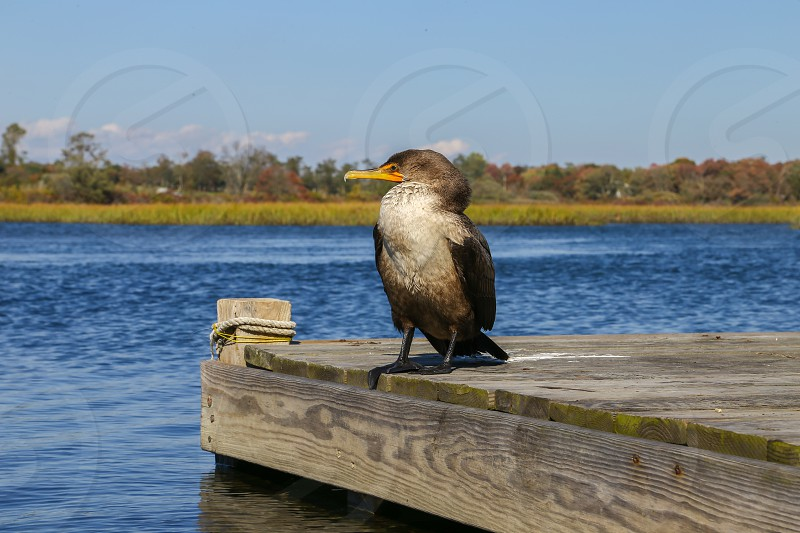 Bird pelican water dock scenery autumn fall blue nature animal wild life wildlife photo
