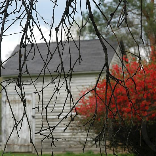 grey tree twig photo
