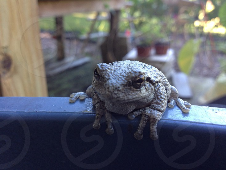 A toad sitting on a ledge in the middle of a lush garden. photo