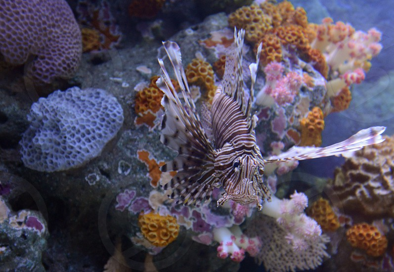 the Siam Ocean World Aquarium in the city centre in Pratunam in the city of Bangkok in Thailand in Southeastasia. photo