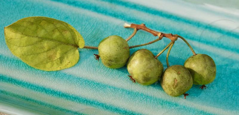 Green kiwi fruit food platter plate vitamin healthy baby kiwi  photo