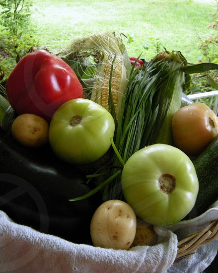 Basket of red and green tomatoes peppers potatoes eggplant chives and corn photo