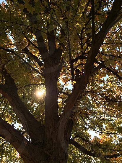 木漏れ日 photo