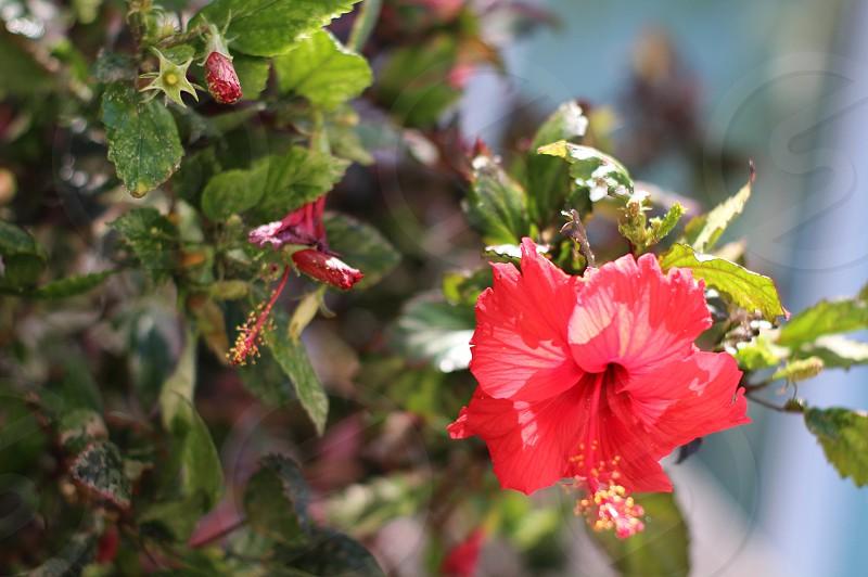 A pretty flower photo
