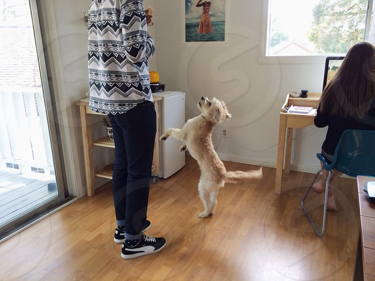 white dog standing near a person photo