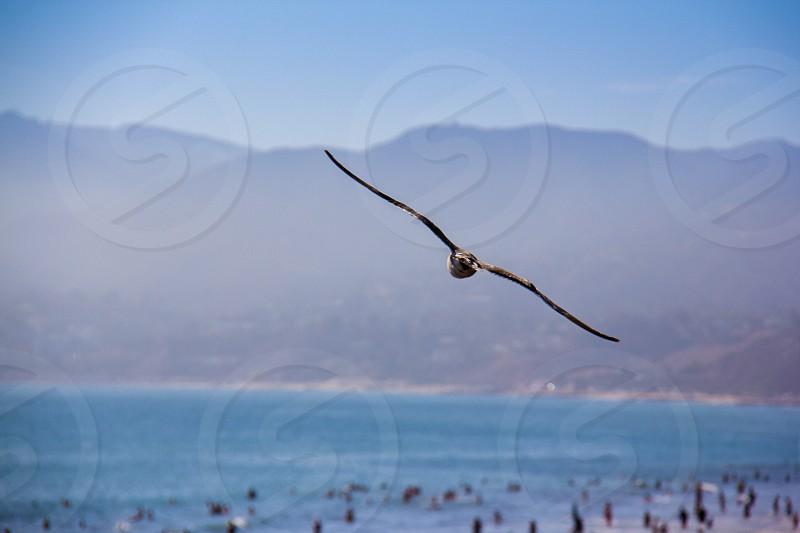 brown flying bird photo