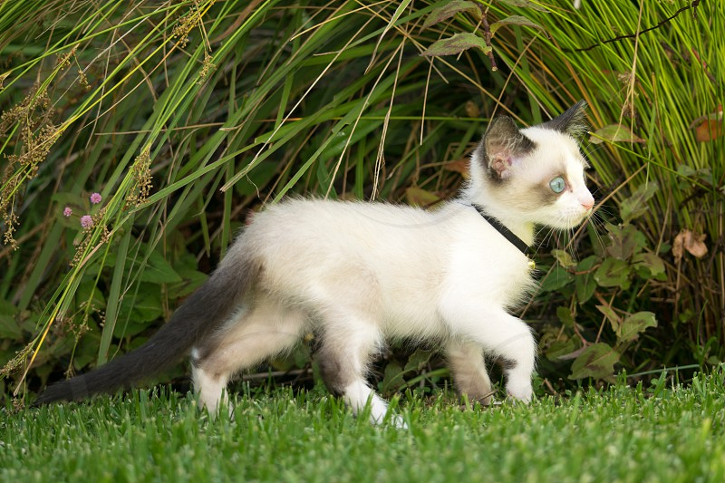 Discovery kitten explore garden cat photo
