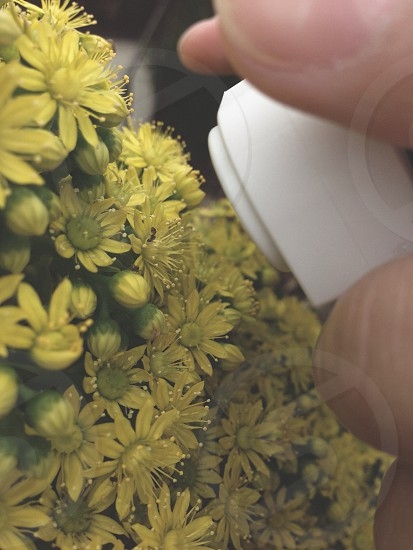Olloclip macro of bugs on flowers photo