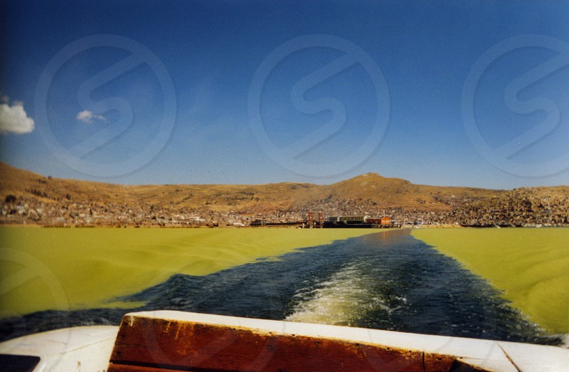 Algae and plankton atop Lake Titicaca (Titiqaqa) Peru Bolivia photo