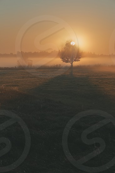 Sun rising above field flooded with fog in the morning. Meadow landscape with one tree in the field photo