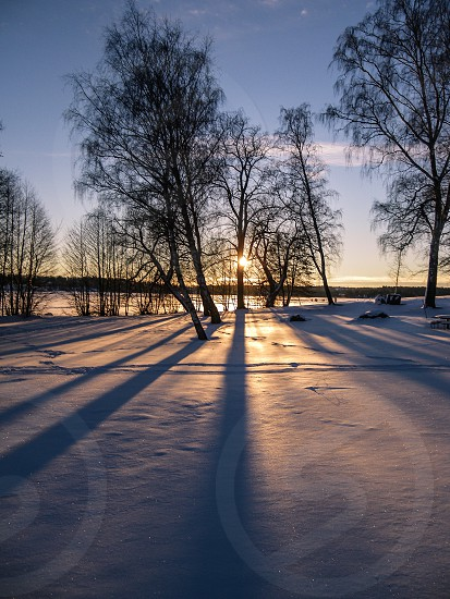 Winter trees with shadow photo
