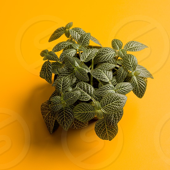 A plant in a yellow background photo