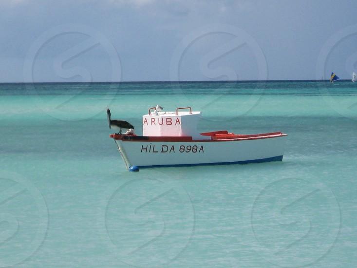 Pelican in Aruba photo