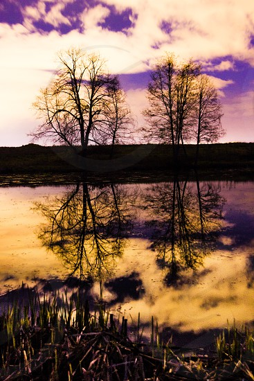 reflections reflection trees sunset pond photo