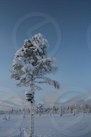 Winter Paradise: Lapland photo