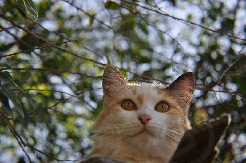 Cat guarding the backyard   photo