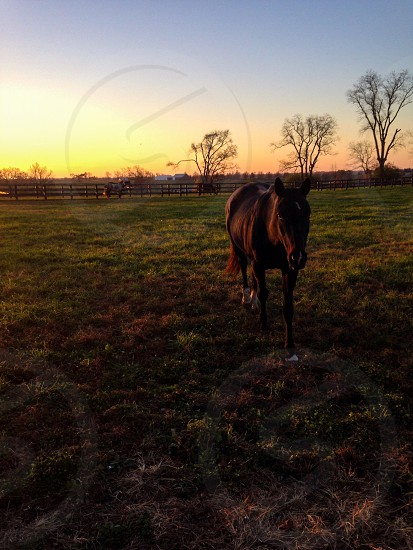 Polo pony in the early AM. photo