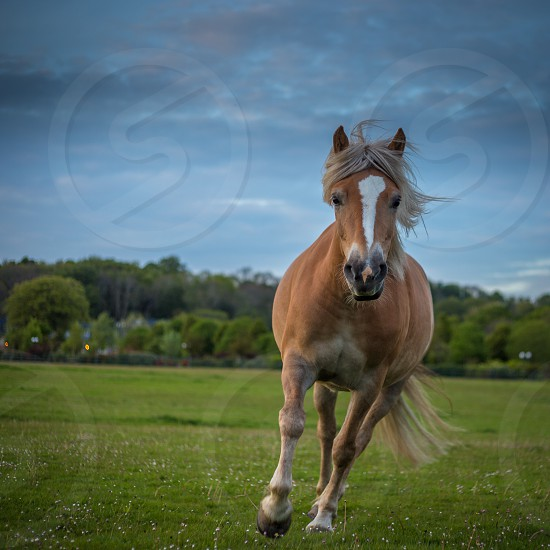white and brown horse running on green field photo