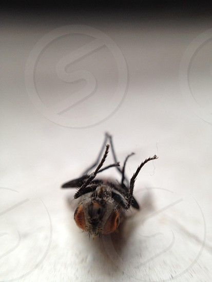 black and brown wasp photo