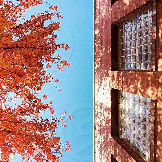 bird's photo of trees in front of brown building with clear glass window photo