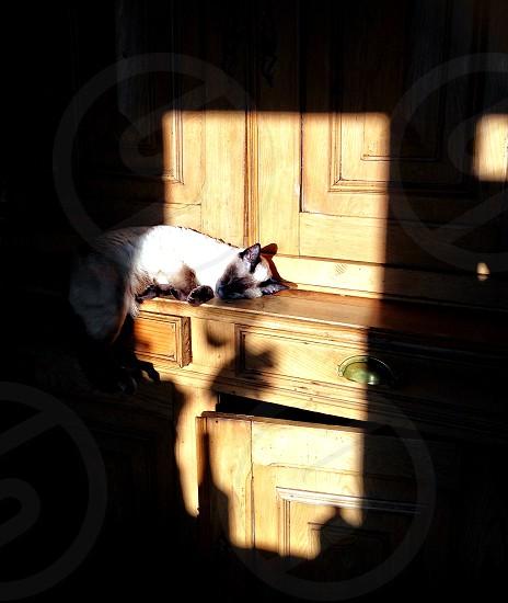 shadow-play cats kittens siamese sleep shadows keyhole photo