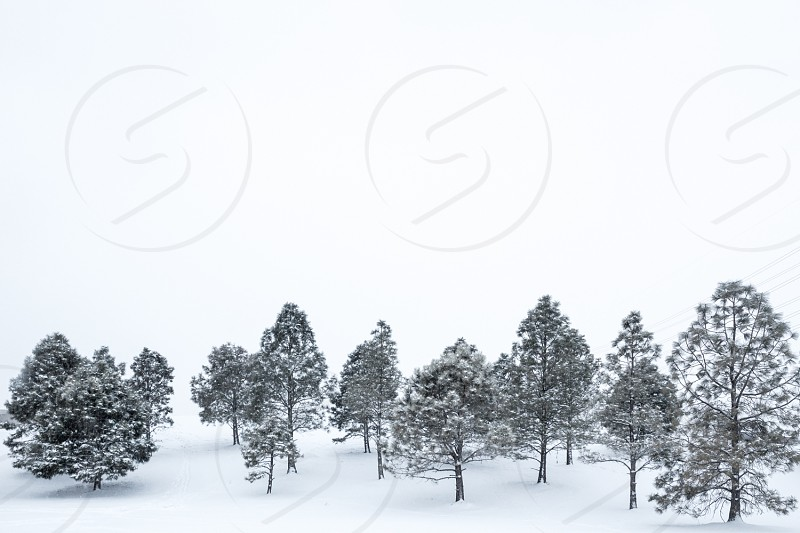 large trees in snow covered field below bright sky at daytime photo