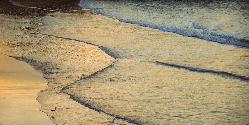 Sunset beach bird forage foraging water ocean dream glisten glistening alone lonely loneliness photo