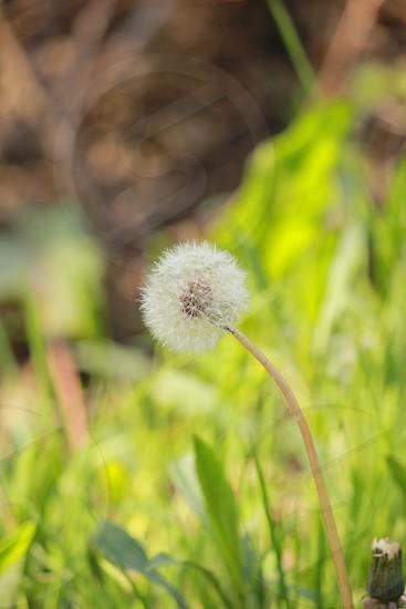 photo of dandelion in macro shot photography during daytime photo