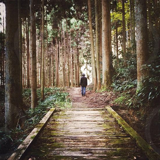 man walking under trees photograph photo