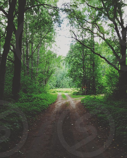 Road through the woods photo