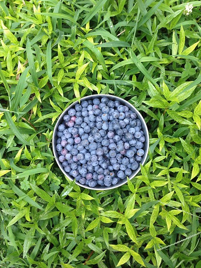green leaves silver round bucket filled with round blueberries photo