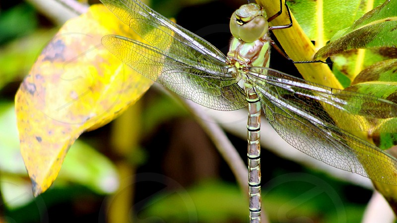 Dragonfly insect bug outdoors photo