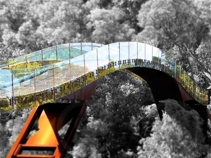 Treetop Bridge photo