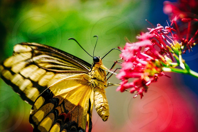 Butterfly spring earth day colorful flowers living life photo