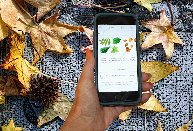 Aerial view of a hand using a cell phone to search types of leaves on the ground with a cellphone camera. photo