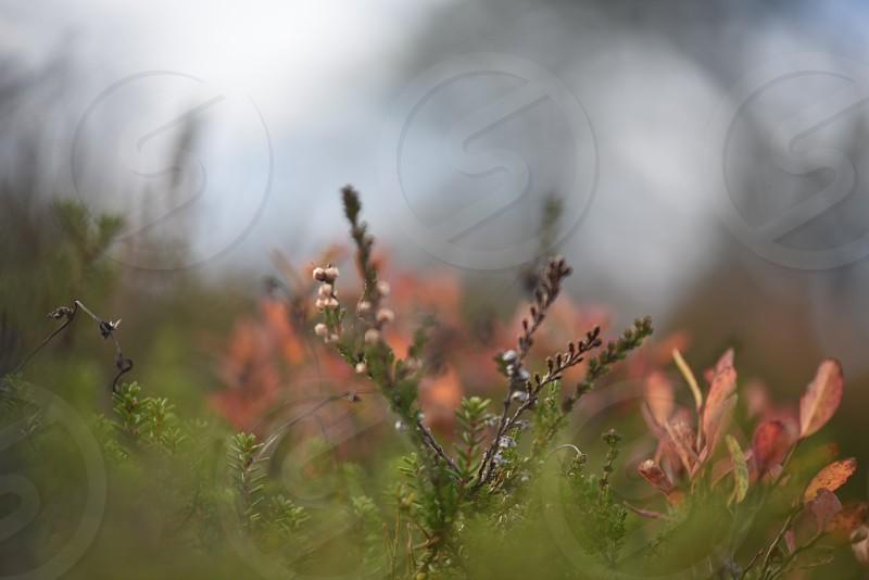 høstløv photo