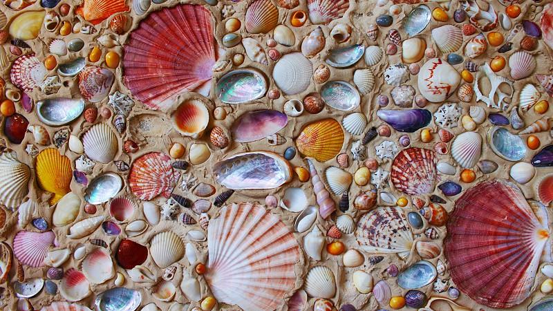 multicolored sea shell ornament photo