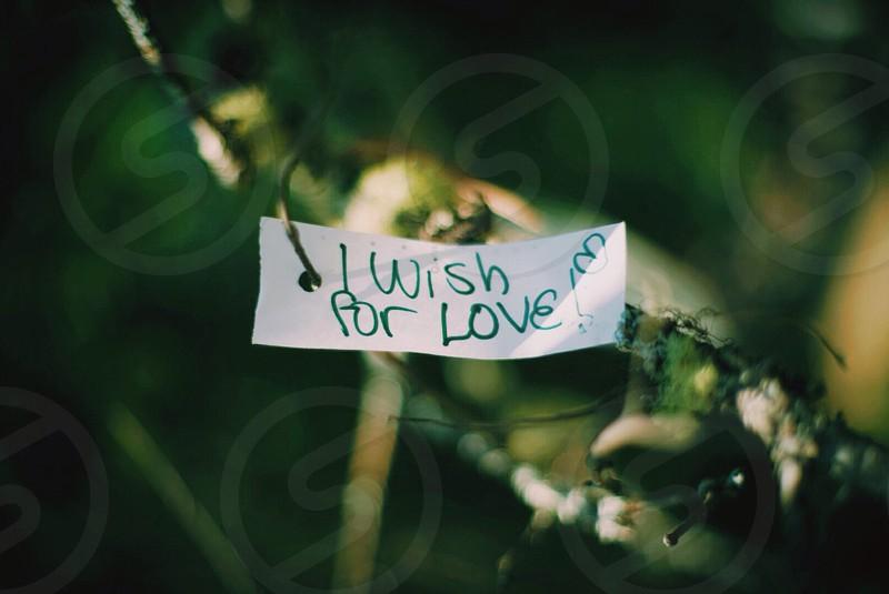 """Wishing Tree"" art motivational abstract  photo"