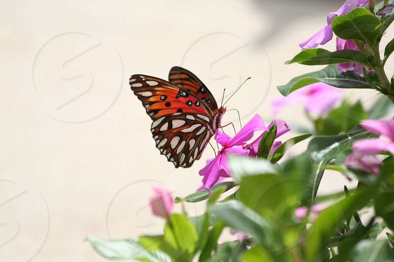 Butterfly in spring photo