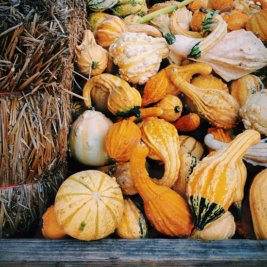 Gourds photo