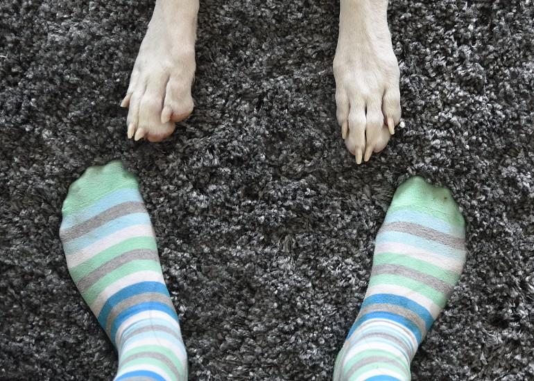 Feet paws companionship. photo