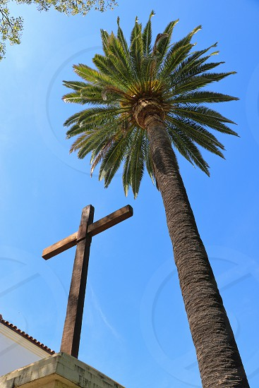 Looking up at a wooden cross near a tall palm tree photo