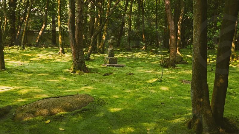 A moss garden Kyoto Japan photo