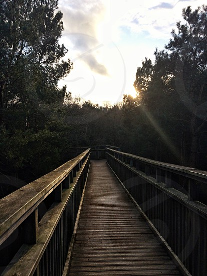 Treetop walk - northampton photo