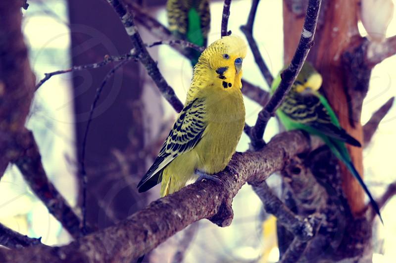Call me Mellow Yellow photo