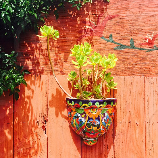 green leaf plant on purple orange and blue wall mounted pot on orange wooden fence with green leaf vine plant photo